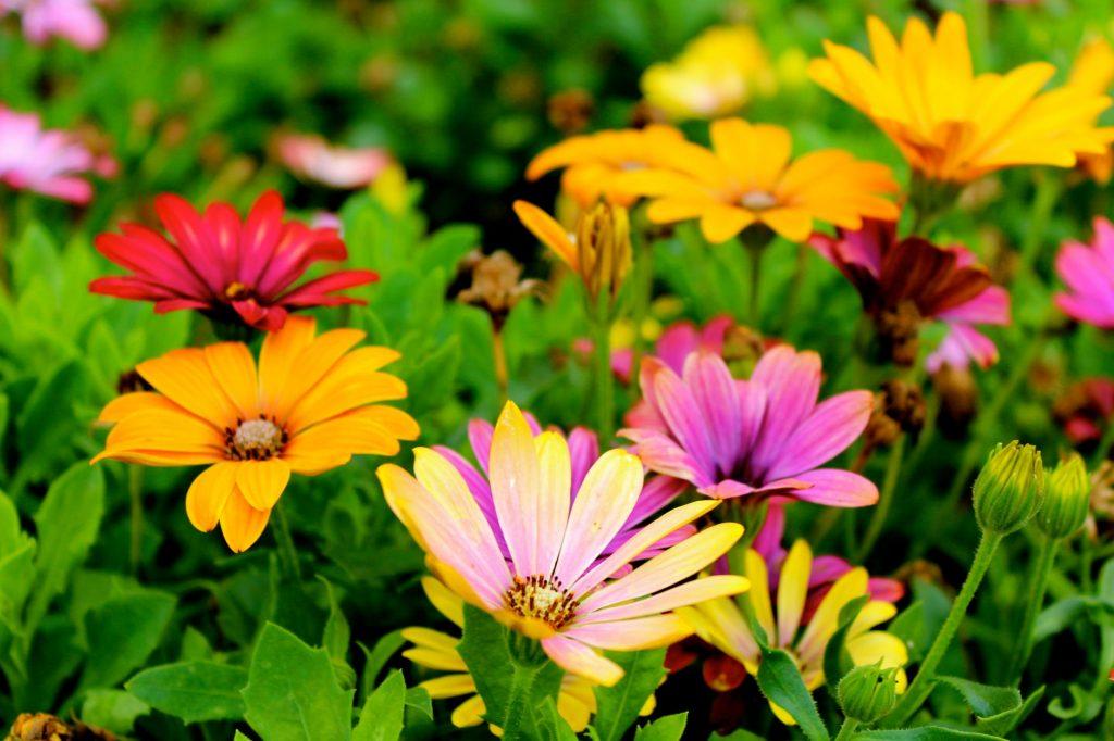 modesto landscaper flowers