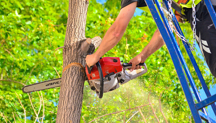 tree removal cutting